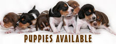 Puppies Available In India